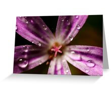 extreme macro of pink Roberts herb flower Greeting Card