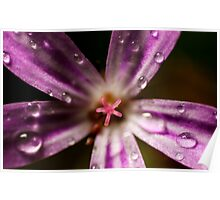 extreme macro of pink Roberts herb flower Poster