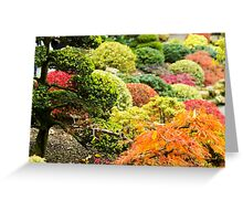 Multicolored Plants - Nature Photography Greeting Card