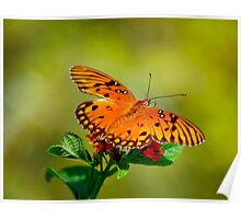 Butterfly Hanging Out Poster