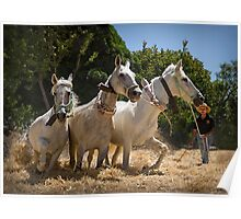 Threshing the corn by horse Poster