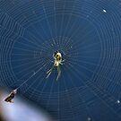 Little Green Spider by Rick  Friedle
