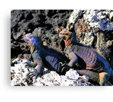 Galapagos Marine Iguana Buddies Canvas Print