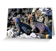 Galapagos Marine Iguana Buddies Greeting Card