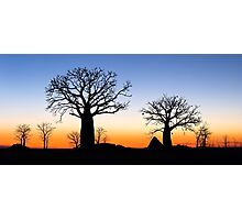 Boab Silhouettes (Panorama) Photographic Print