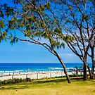 A little QLD goodness by faithie