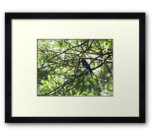 Perfect Bird Collection #11 Framed Print
