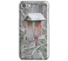 Perfect Bird Collection #15 iPhone Case/Skin