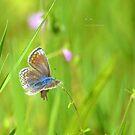 """ Butterfly Meadow ~ 1 "" by Richard Couchman"