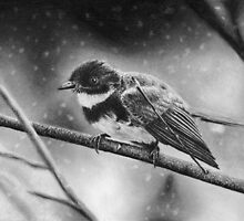 Bird in Winter by artddicted