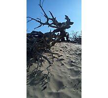 Dunes and Brush Photographic Print
