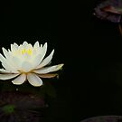 Lily by Cathy Jones