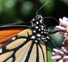 Monarch Butterfly on Milkweed Sticker