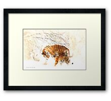Tigers in the Snow Framed Print