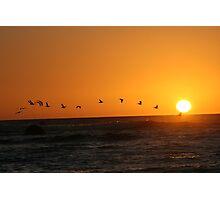 Bird Sunset Silhoutte Photographic Print