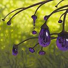 Cyphomandra vitra by Patricia Van Lubeck