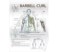 Barbell Curl Exercise Diagram Poster