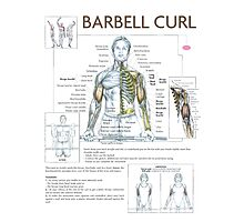 Barbell Curl Exercise Diagram Photographic Print