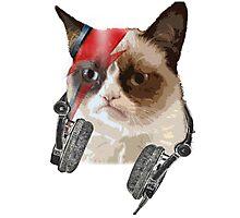 Cat bowie Photographic Print
