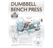 Dumbbell Bench Press Exercise Diagram Poster