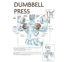 Dumbbell Overhead Press Exercise Diagram Photographic Print