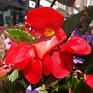 Colorful Flower, Jersey City, New Jersey by lenspiro