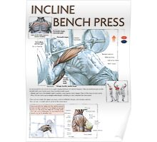 Incline Barbell Bench Press Anatomy Poster