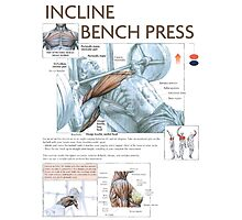 Incline Barbell Bench Press Anatomy Photographic Print