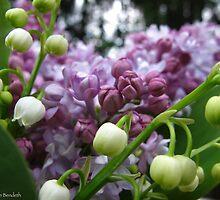 Fragrant Spring by MarianBendeth