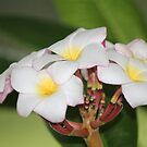 Frangipani Bouquet by Bob Hardy