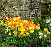 Giggling Tulips by MarianBendeth