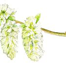 Green willow catkin watercolor painting by Sarah Trett