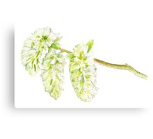 Green willow catkin watercolor painting Canvas Print