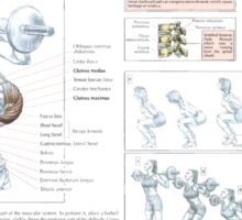 Barbell Squat Exercise Diagram Sticker