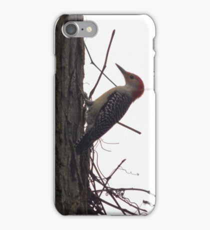 Around-the-World Animals Collection #6 / Perfect Bird Collection #16 iPhone Case/Skin