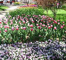 Tulip Time in Australia 13 Photograph by Heatherian by Heatherian