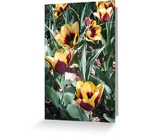 Tulip Time in Australia 14 Photograph by Heatherian Greeting Card