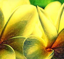 Painted Frangipanis - Still Life Sticker