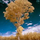 Hope Island Reserve - Infrared  Trees 2 by spiritoflife
