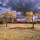 Hope Island Reserve - Infrared Trees 3 by spiritoflife