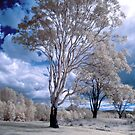 Hope Island Reserve - Infrared Trees 4 by spiritoflife