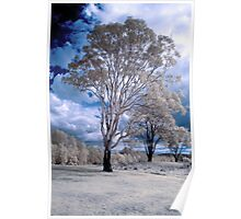 Hope Island Reserve - Infrared Trees 4 Poster
