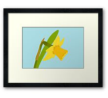 Single Daffodil Framed Print