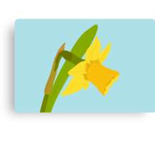 Single Daffodil Canvas Print