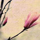 Magnolia  by Jessica Jenney