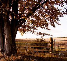 Autumn Day by karasutherland