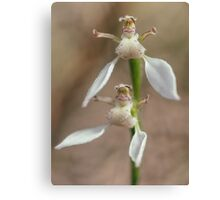 Crinkle-leafed Bunny Orchid Canvas Print