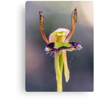 Hare Orchid Canvas Print