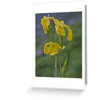 Yellow Flag Iris - Donegal Greeting Card