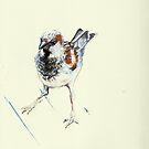Terschelling Sparrow by Cameron Hampton
